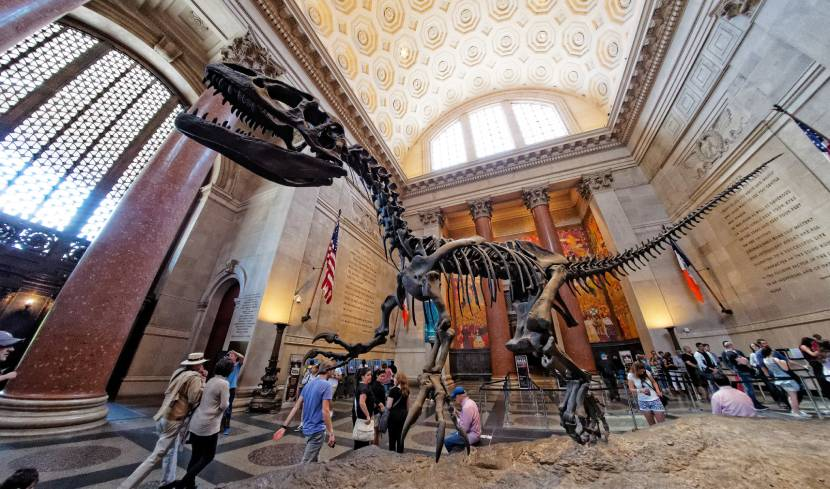 Must-see Places in New York - The American Museum of Natural History