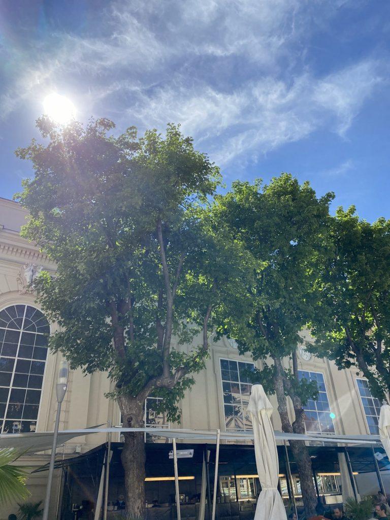 Ein Bild, das Baum, draußen, Himmel, Gebäude enthält.  Automatisch generierte Beschreibung